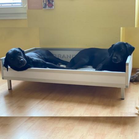 Bac de couchage pour chien - Labrador Retriever